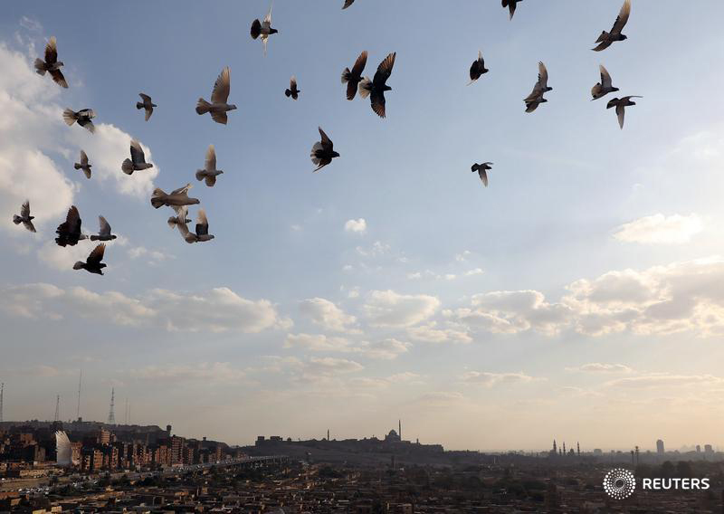 A general view of the city of the dead as pigeons fly overhead in Cairo, Egypt, March 13, 2017. Photography: Mohamed Abd El Ghany