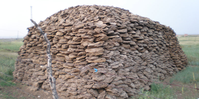 cow dung patties