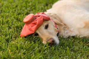 headache -- funny dog
