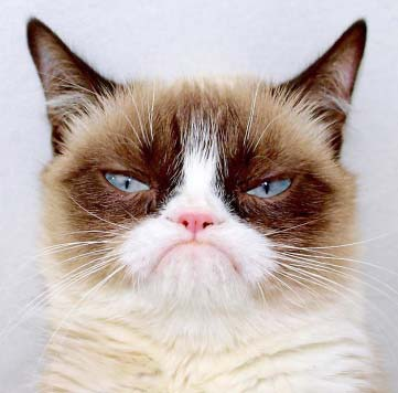 Trademark issues with grumpy cat licensing