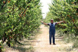 Farmer Al in the orchard