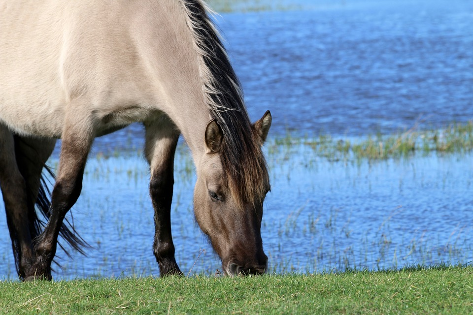 horses water pixaby free-1184987_960_720