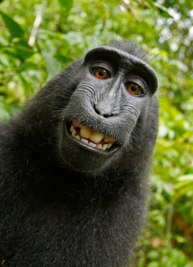 https://jdsupra-html-images.s3-us-west-1.amazonaws.com/e803d62d-129e-4a6a-b1e3-2aa8c9be19bb-monkey_selfie.jpg